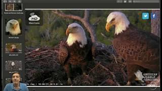 NEFL Eagle Nest - Samson the Charmer? Surprise visit to SWFL / Lunar Eclipse!