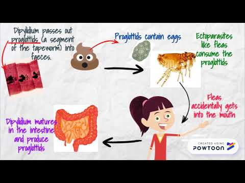 Az aceton szaga a szájból jel
