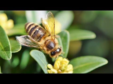 Продукты пчеловодства в лечении опухолевых и хронических заболеваний.