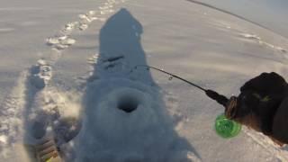 Балансир мебару для ловли окуня зимой