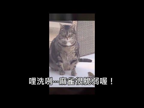 機掰的貓咪