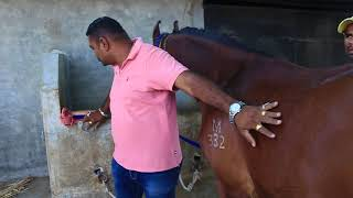 HOW TO TAKE CARE OF HORSE | Culture Of Horse |  A Way To Keep Horse |