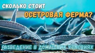 Рыбоводно биологическое обоснование выращивания осетровых рыб