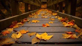 «Осень жизни» — православные стихи отца Олега Моленко