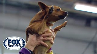 Best of the 2018 Masters Agility Championships | WESTMINSTER DOG SHOW (2018) | FOX SPORTS