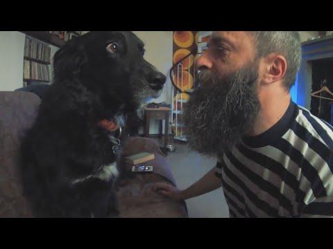 Il cane, la quarantena e l'ironia di Ariele Frizzante