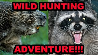 Why Do We Hunt Raccoons and Beavers?