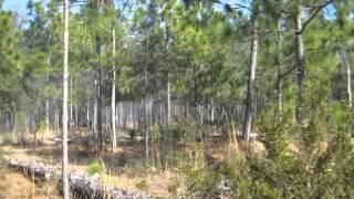 Battle of forks road reenactment 6 - Video Youtube
