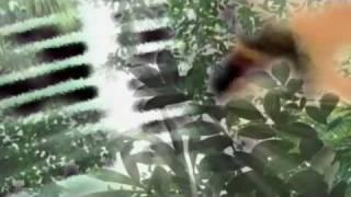 Jihaku by Tyler [Widescreen HD]