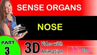CH06-SENSORY SYSTEMS-PART07-THE NOSE
