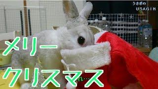 メリークリスマス・雑に実験天使ウサギエルRabbitQueen