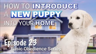 How to Introduce a New Puppy Into Your Home. Episode 23