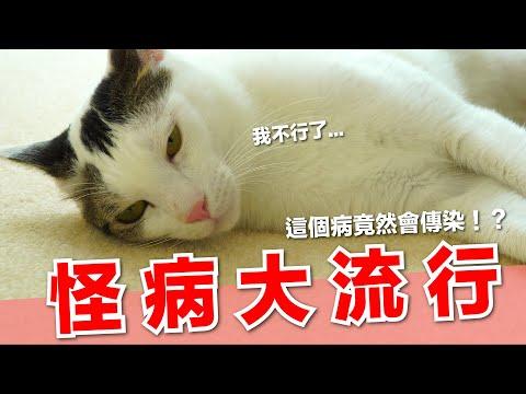 好味小姐,最近家裡貓咪發生大疫病!居然是拍屁股!?