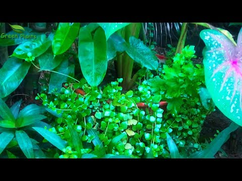 Backyard Garden Idea with Canna lily | Small Space Garden Ideas | Container Gardening//GREEN PLANTS