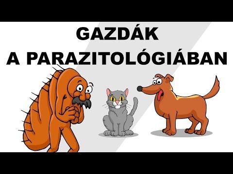 Giardia azithromycin
