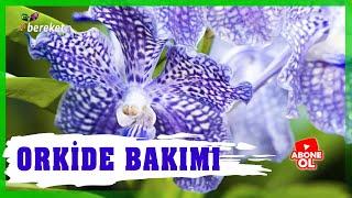 Bahçıvanın Elinden - Orkide Bitkisinde Bakım