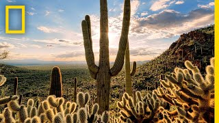 Deserts 101 | National Geographic