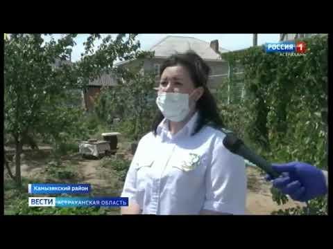 Управление Россельхознадзора продолжает устанавливать феромонные ловушки для выявления очагов опасных карантинных вредителей на территории Астраханской области