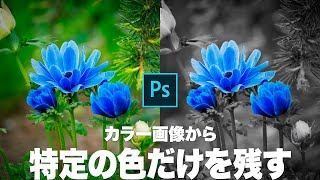 【Photoshop講座】特定の色だけを残してモノクロにする方法【パートカラー】