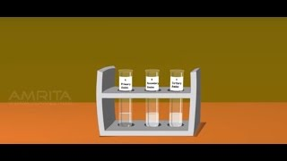 Tests for the Functional Group Present in the Organic Compounds - MeitY OLabs