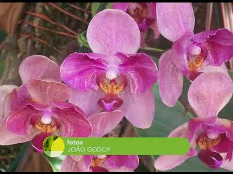 Mundo das orquídeas