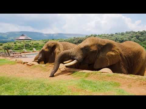 A relaxation video of many kind of animals