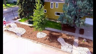 Low Budget, Low Maintenance Landscaping