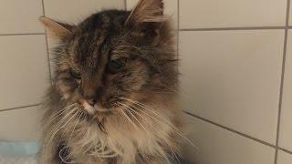 Krevni transfuze u kočky