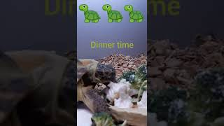 Tortoise eating his dinner