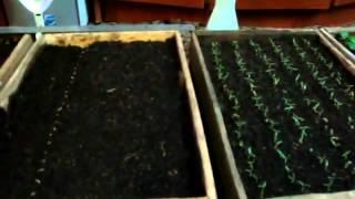 Как и когда сеять помидоры на рассаду видео