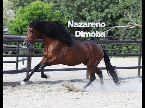 Nazareno Dimoba - Junio 2018