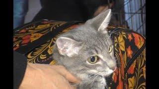Благотворительная акция «Ярмарка Кошек»