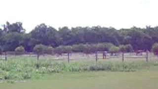 preview picture of video 'Horses Farm Austria 3'