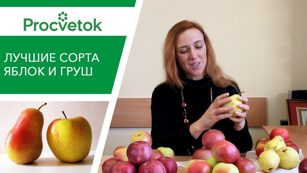 Какие сорта яблонь и груш посадить? Обзор лучших сортов