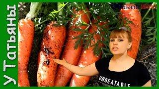 Секреты выращивания моркови видео