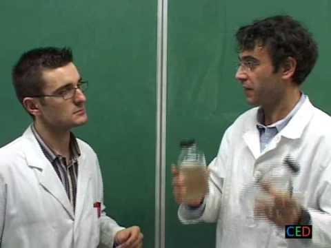 Comme traiter le microorganisme végétal sur la peau de la tête le forum