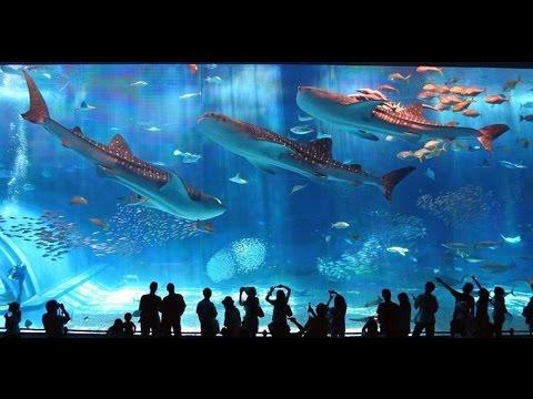 Турция, Аланья. Часть 3.2 (Океанариум) - Информация для туристов. Турция