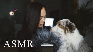 ASMR Dogs & Mic brushing with whispering in Finnish