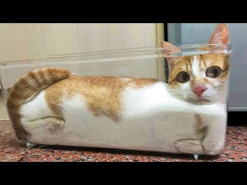 😂 Funniest 🐱 Cats And 🐶Dogs - Awesome Cute Pet Animals' Life 😇