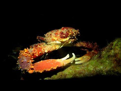 Nightdive Curacao (Sun Reef)