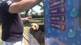 Praonica za pse - Indoor