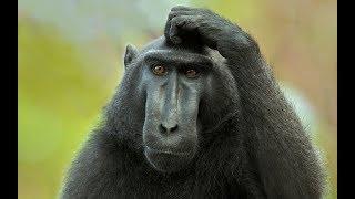 Учёный показал как на языке обезьян будет ЗДРАВСТВУЙТЕ.Что скрывают обезьяны  от человека.Док. фильм