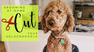 How To Cut Your Goldendoodles Hair At Home | Groom Your Doodle