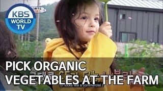 Pick organic vegetables at the farm! [The Return of Superman/2019.08.18]