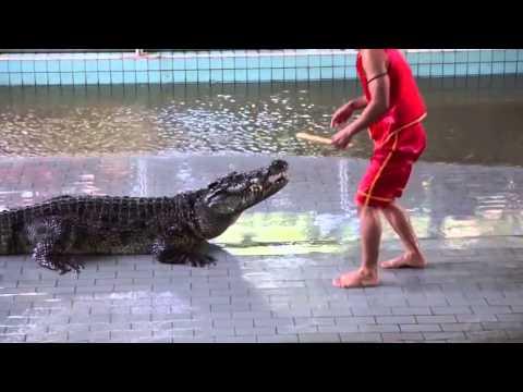 @news 14 03 12 - Da braknesh v ustata na krokodil
