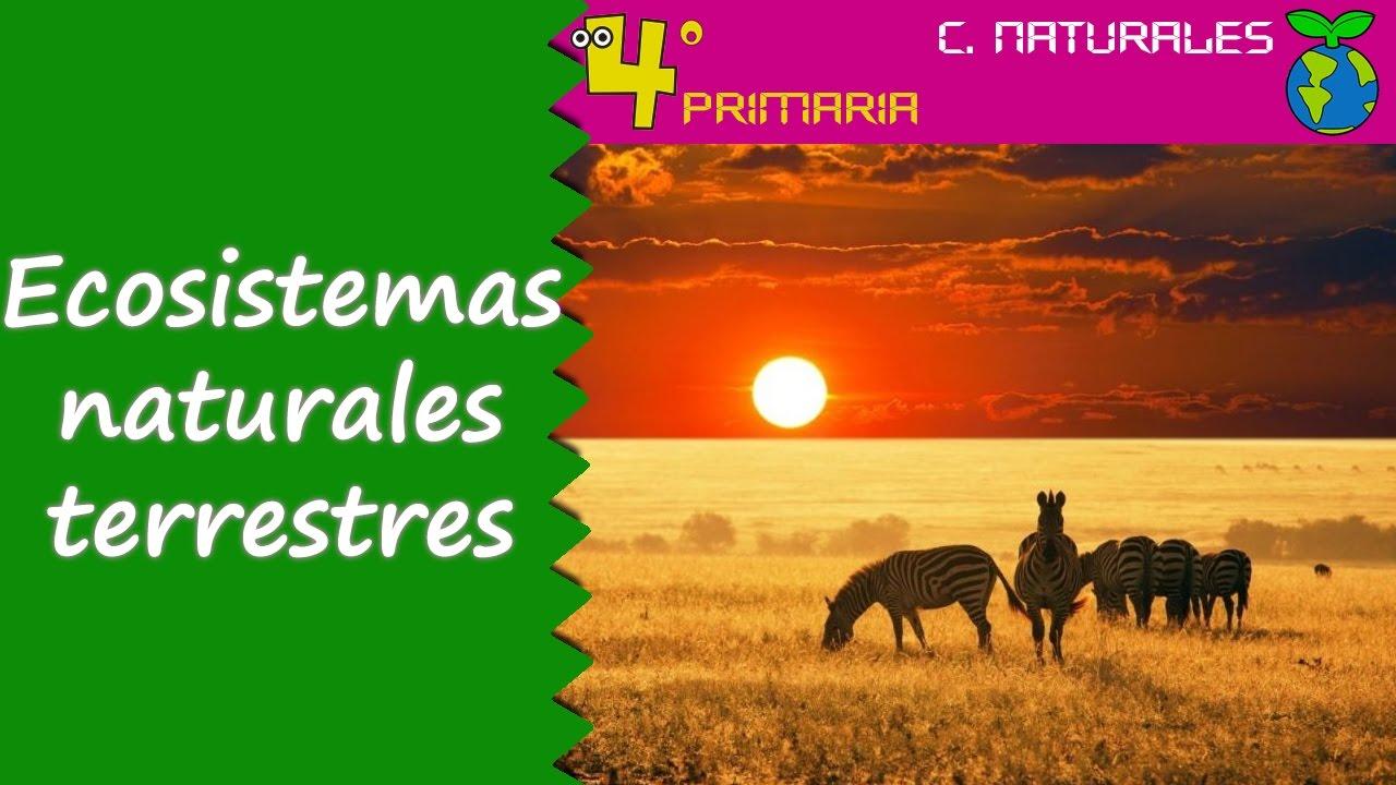 Ciencias de la Naturaleza. 4º Primaria. Tema 5. Ecosistemas naturales terrestres