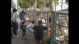 preview picture of video 'Terza fiera dei Genovesi a San Cipriano'