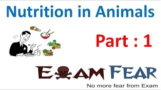 Biology Nutrition in Animals Part 1 (Introduction) Class 7 VII