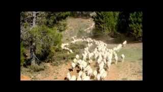 preview picture of video 'Serranía de Cuenca: Trashumancia 2012 desde el Valle de Alcudia y Andújar a la Vega del Codorno'