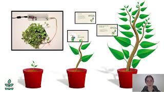 Aplicație IoT pentru monitorizarea umidității solului la plante de interior